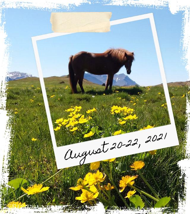 Mr Iceland - horse retreat August 20-22 2021