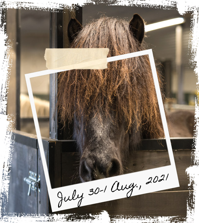 Mr Iceland - horse retreat July 30-1 August 2021