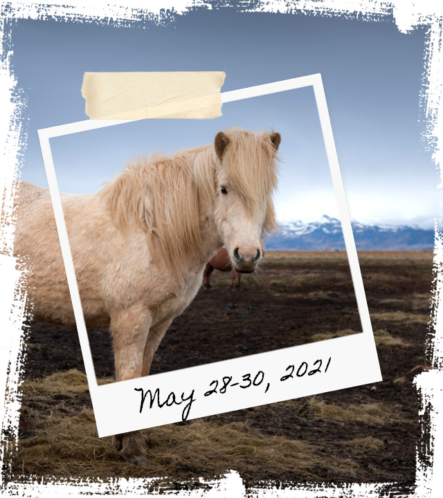 Mr Iceland - horse retreat May 28-30 2021